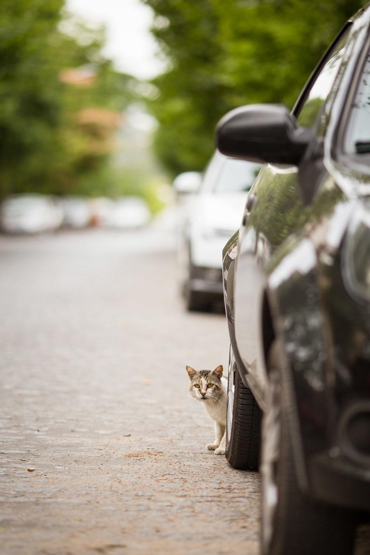 wedding-travellers-argentina-tandil-street-cat-car