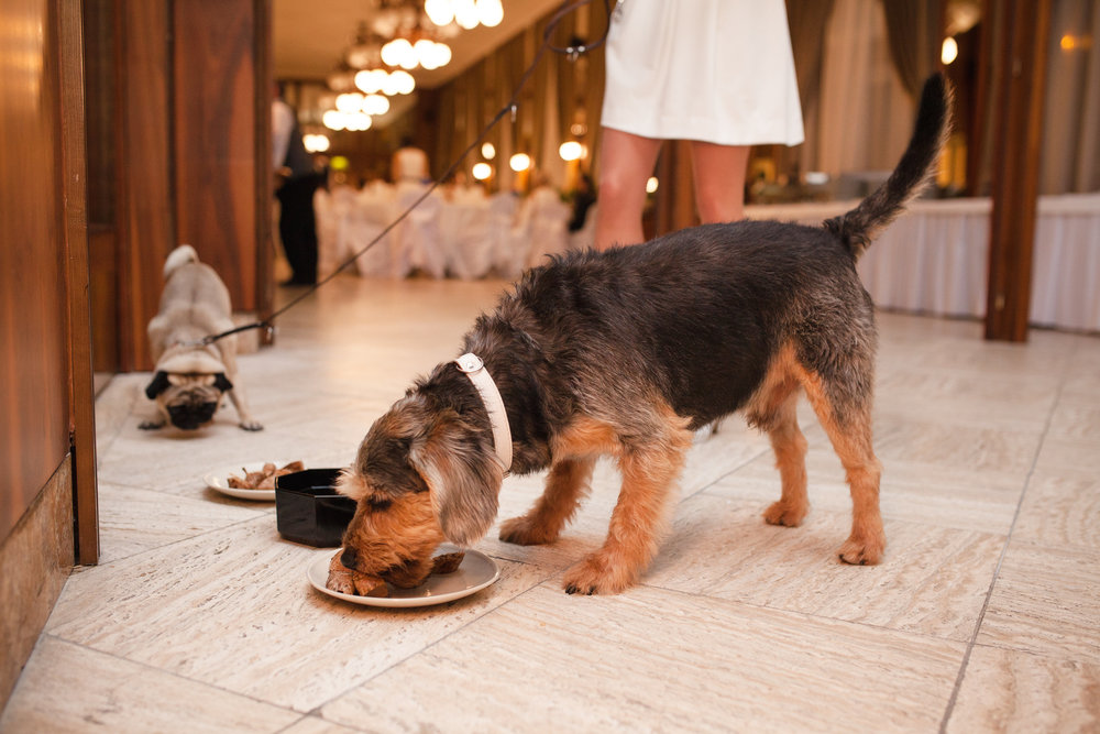 destination-wedding-photographer-slovakia-bratislava-reception-dogs-eating-2.jpg