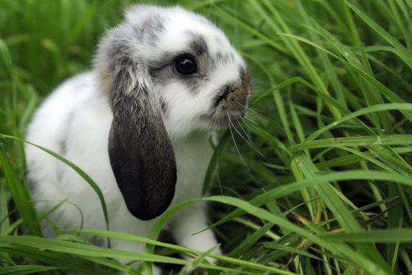 Bunny_Grass.JPG
