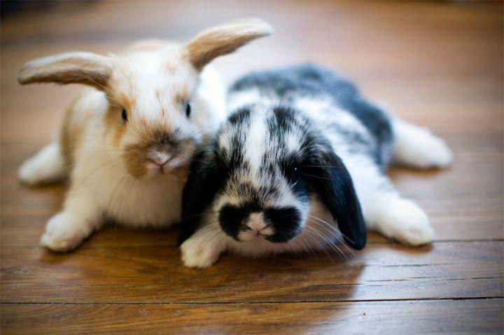 bunnies-compressor.jpg