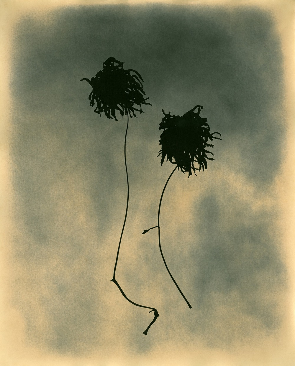 Photogram Running Fowers.comp.9.jpg