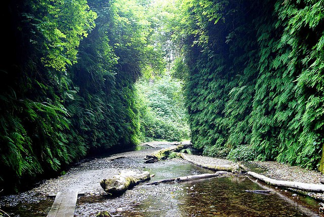 Fern Canyon in Prairie Creek