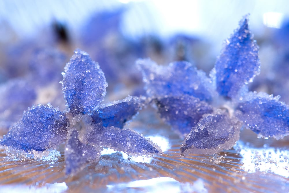 Candied Borage Flowers