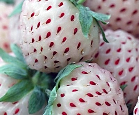 Pineapple-strawberry [Pineberry]