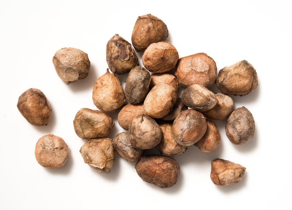 Marula nuts