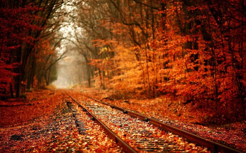 orange_forest_and_rail_road-1920x1200.jpg