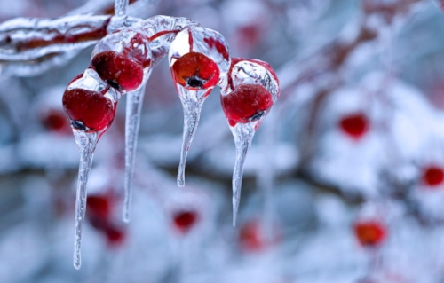 winter-nature-photography-nature-backgrounds-snow-backgrounds-30044.jpg