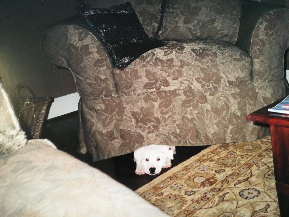 Idgie under the chair