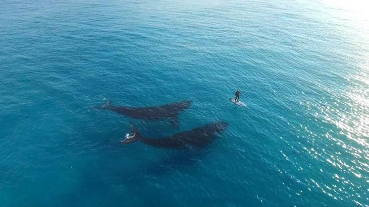 sup-whales-jaimenhudson.jpg