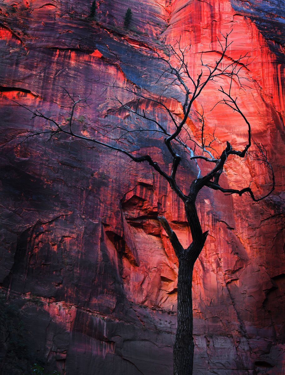 Bare_tree_zion.jpg