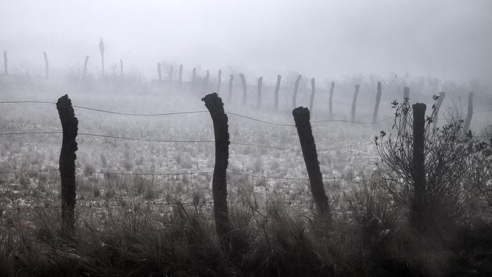 Fence in fog.jpg