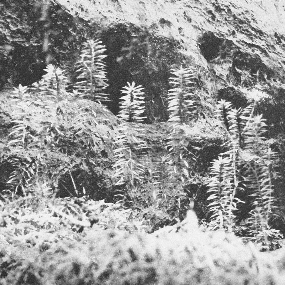Acronym w. Korridor Untitled EP  Cover.jpg