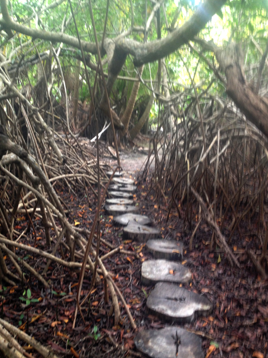 cenote-path_1098.jpg