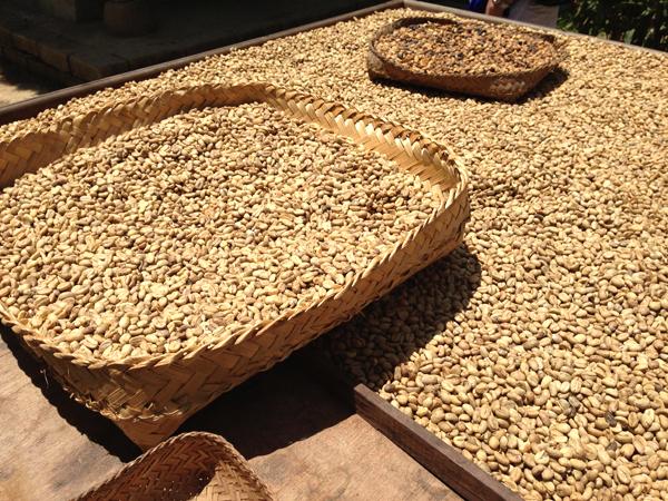 luwak coffee_1114.jpg