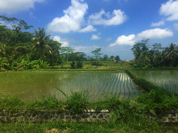 new rice_9114.jpg