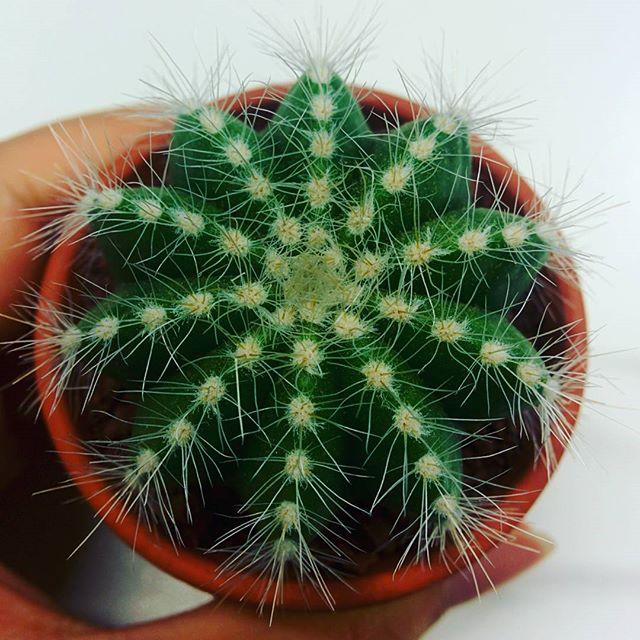 Teeny tiny cactus #1 ❤