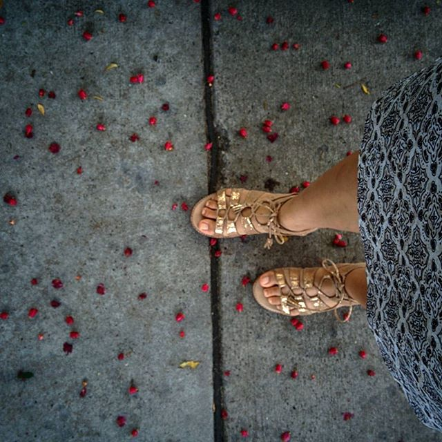 Missing sandal weather and lots of lilli pillies.