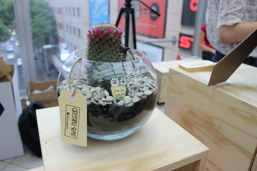 Fish Bowl Terrariums.JPG