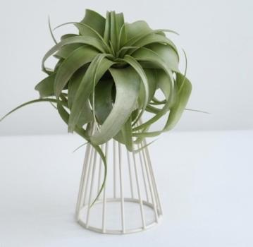 air plant gift idea