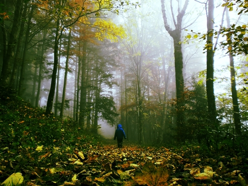 d-hiking-through-misty-forest11.jpg