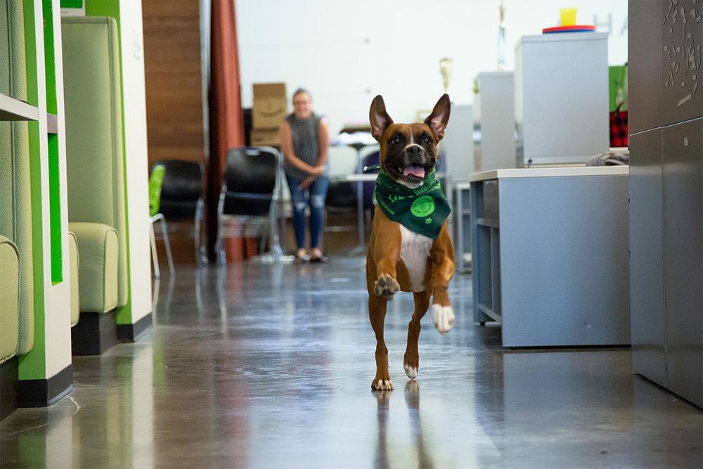 Dog_Days_Ginger.jpg