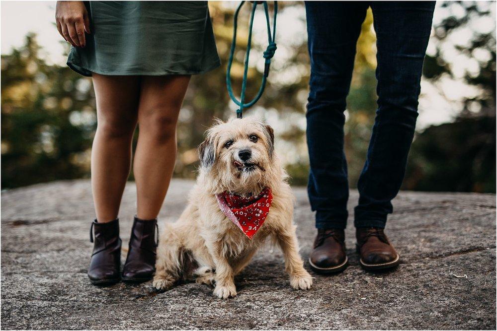 puppy bandana sitting between couple