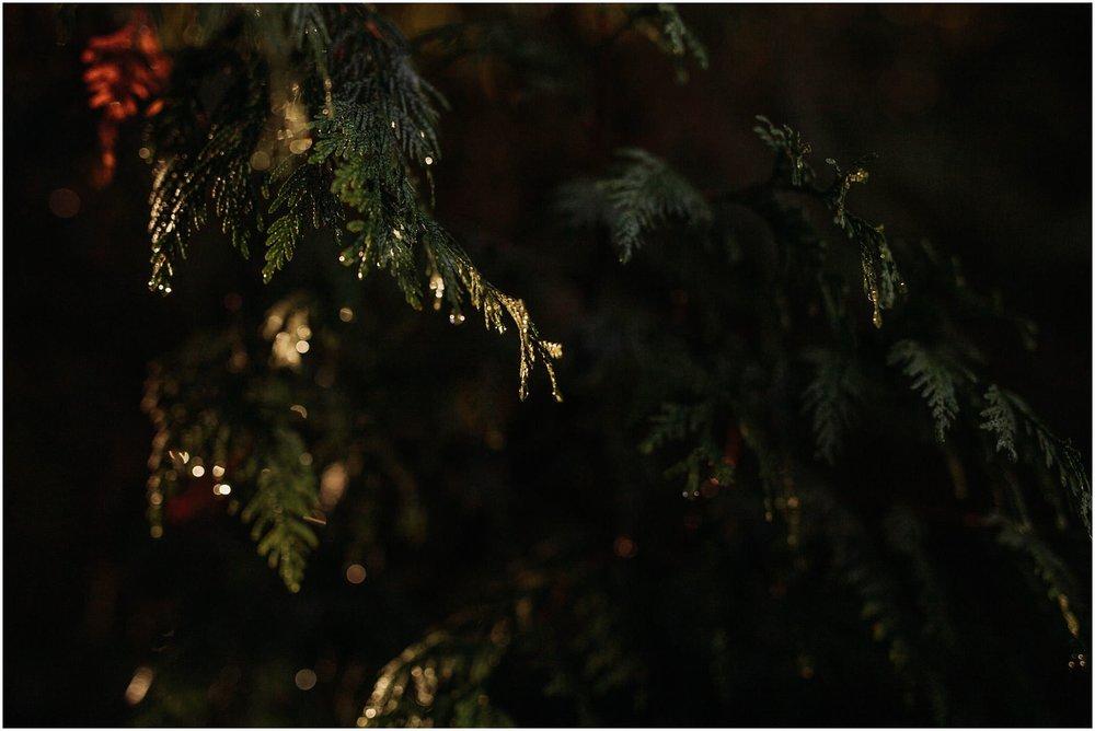 dew drops on tree fall autumn season