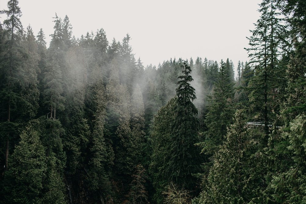 foggy trees capilano suspension bridge north vancouver pnw vibes