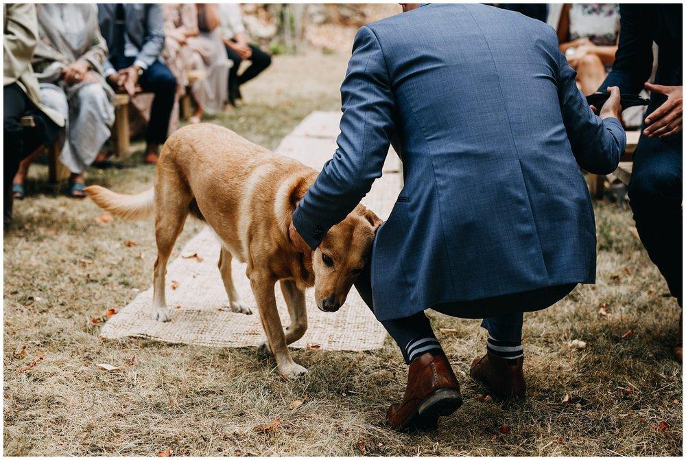 groom and dog at ceremony at mayne island backyard wedding