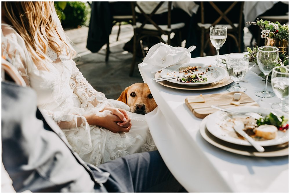 candid moment between bride and dog at intimate mayne island backyard wedding