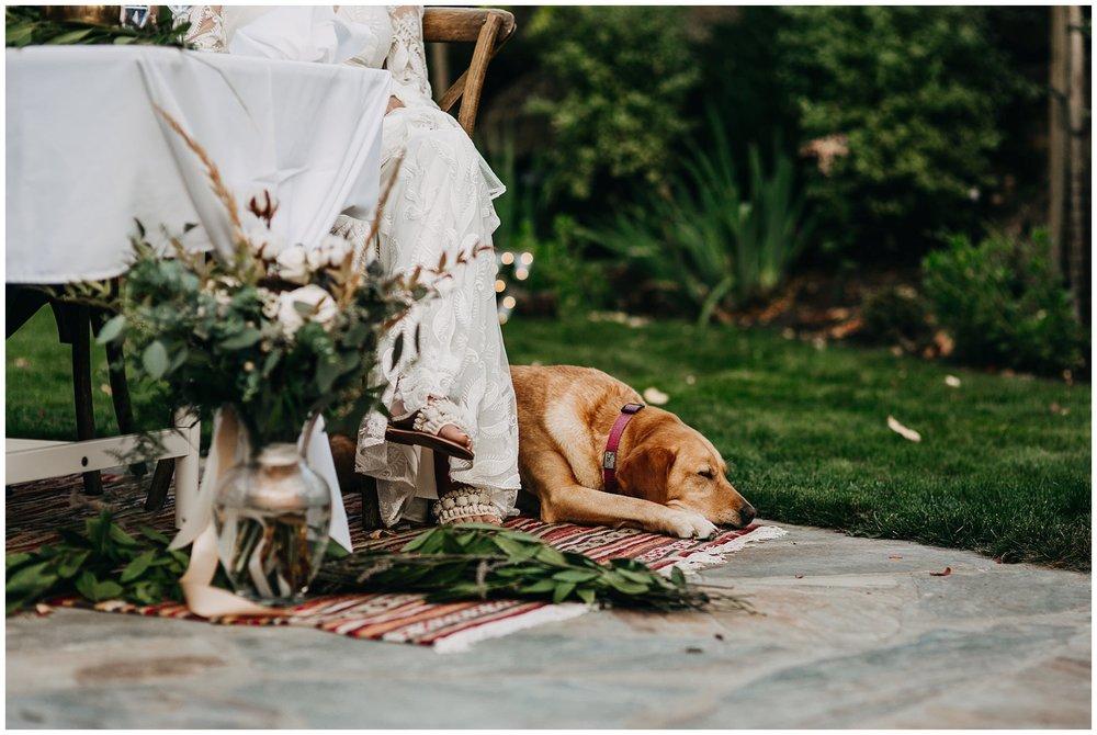 candid moment of dog sleeping at reception at mayne island backyard wedding