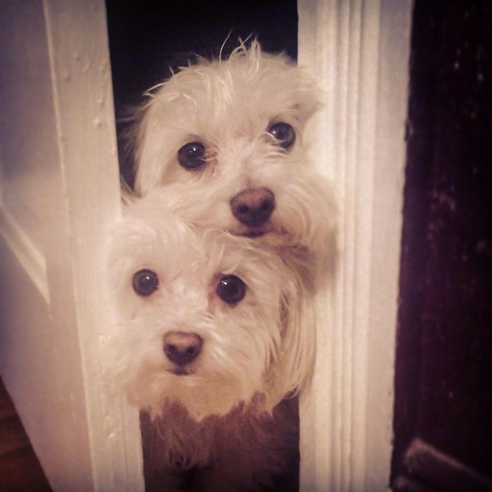 Bonito and Chiquito!