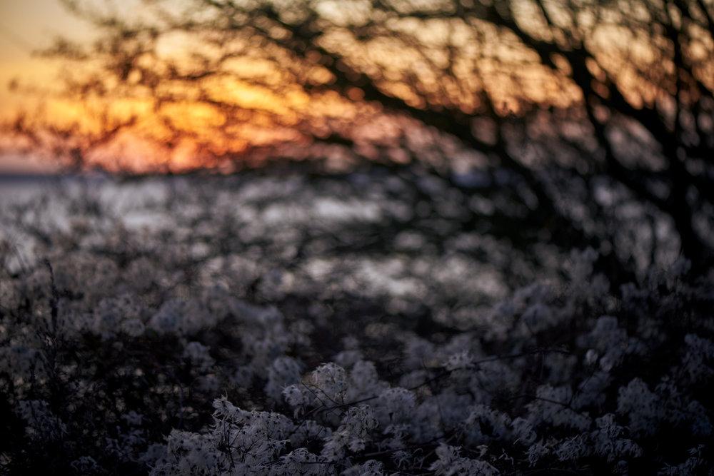 Soft Sun  2017