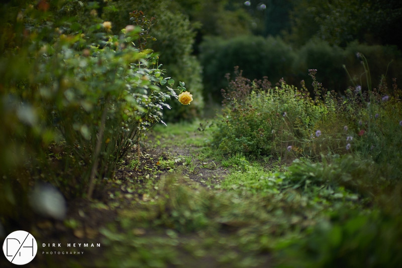 Garden Jacques Wirtz 4* - Late Summer_by_Dirk Heyman_1628.jpg