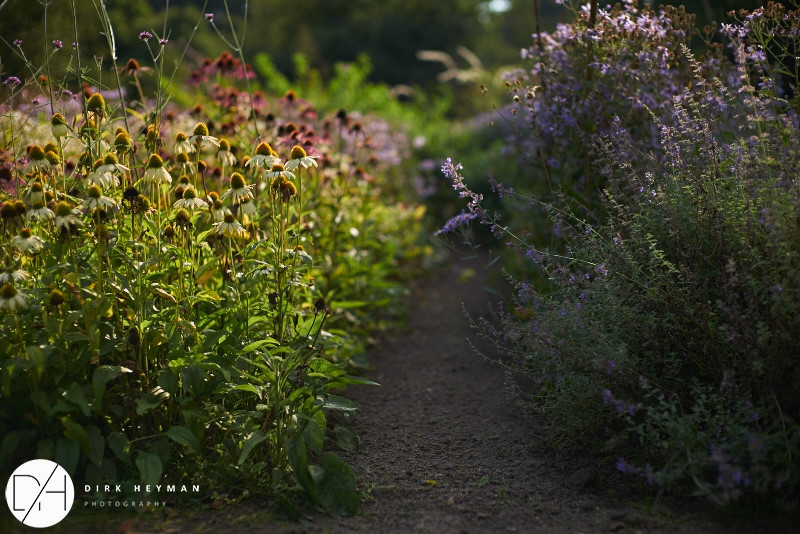 Garden Jacques Wirtz 4* - Late Summer_by_Dirk Heyman (dh_photo@bluewin.ch)_1626.jpg