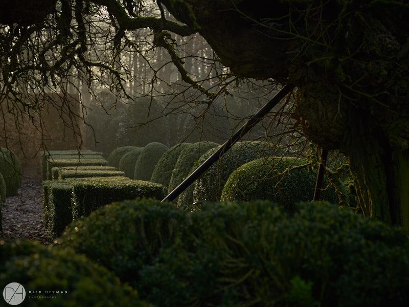 Wirtz Garden Winter by Dirk Heyman 6488.jpg