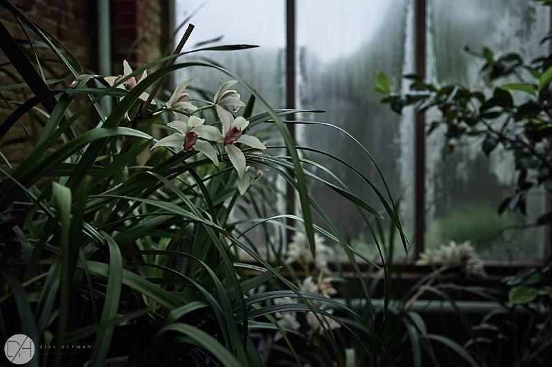 Garden Jacques Wirtz Spring 5 Star Colour by Dirk Heyman 7198.jpg