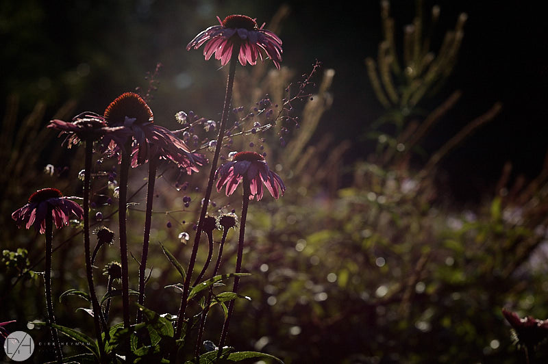 Garden Jacques Wirtz Summer 4 Star Colour by Dirk Heyman 7645.jpg