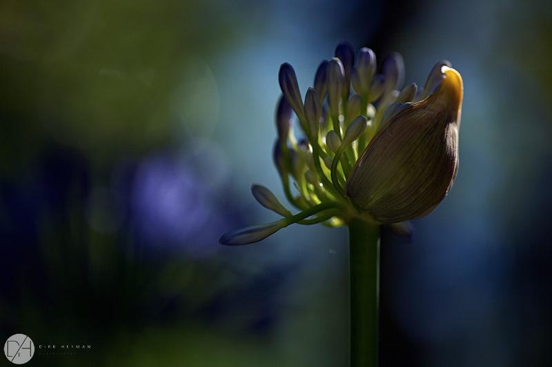 Garden Jacques Wirtz Summer 4 Star Colour by Dirk Heyman 7662.jpg