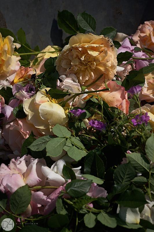 Garden Jacques Wirtz Spring by D Heyman 7268.jpg
