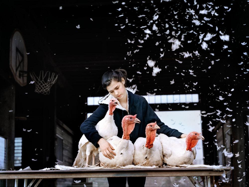 Sienna, Turkey Madonna, Shutesbury, Massachusetts