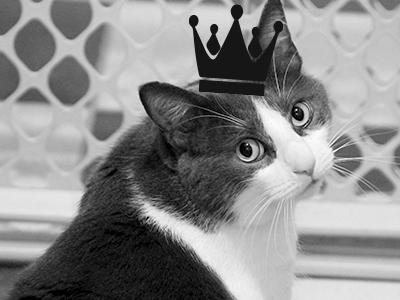 cat-lifestyle.jpg
