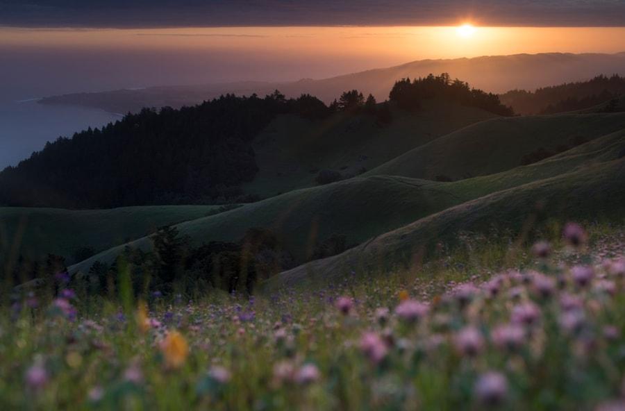 Mount Tamalpais