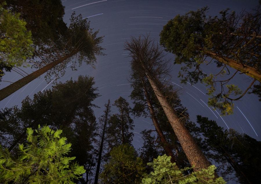 Yosemite Star Trails