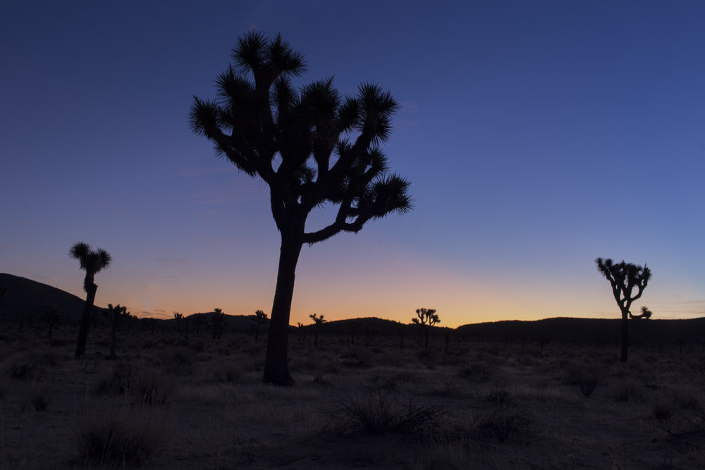 joshuatree_milkyway2.jpg