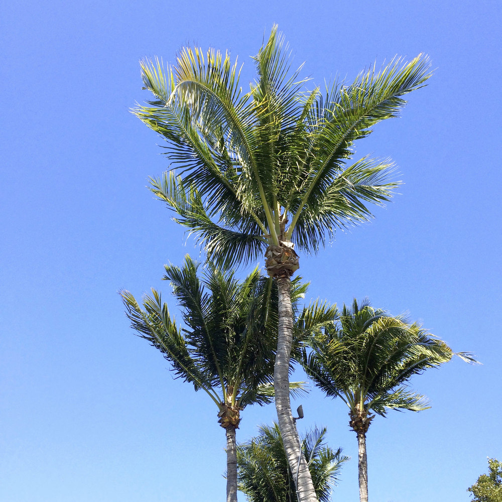 Summer 2015 in Palm Beach, Florida