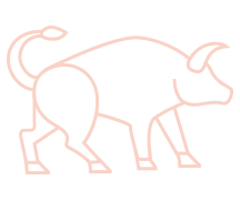 Taurus illustration.png