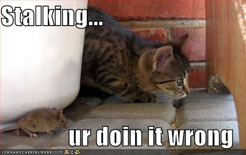 funny-pictures-cat-is-not-stalking-properly