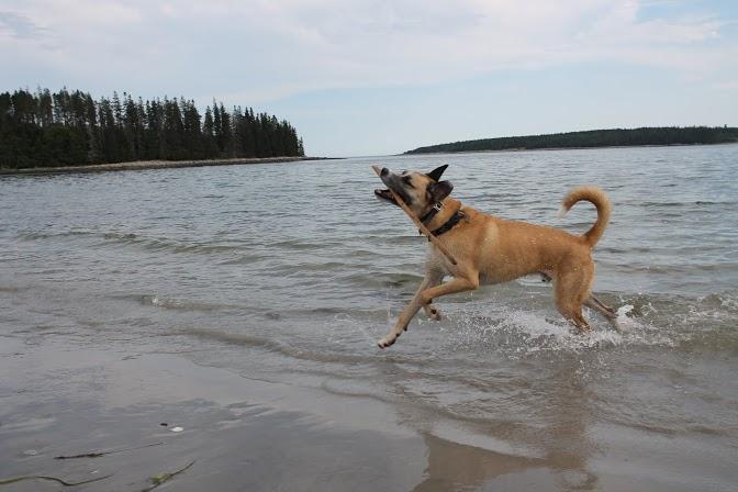 Buckley on the beach