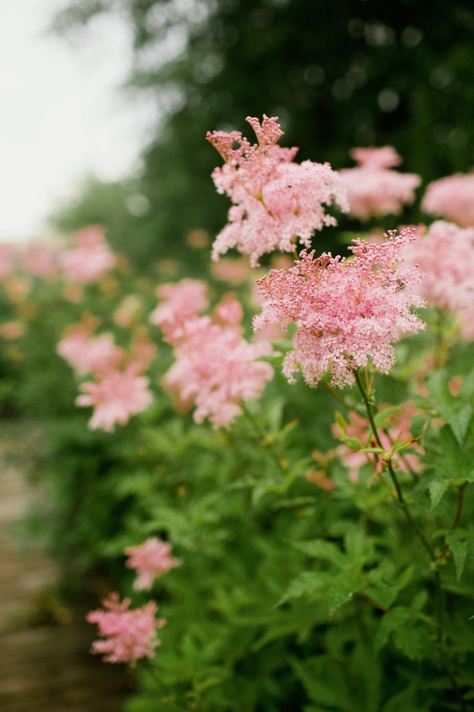 Reiman Gardens summer flowers